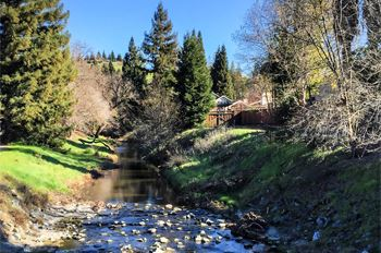 Tassajara Creek