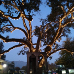 Diablo Old Oak Tree with new lighting 2019